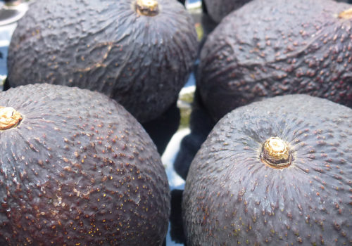 Peninsula Avocados