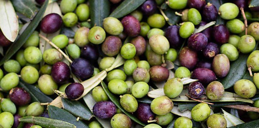 Leontyna Extra Virgin Olive Oil (#036)